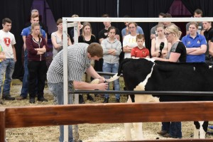 Succesvolle Young Breeders Competitiedag @ ALH