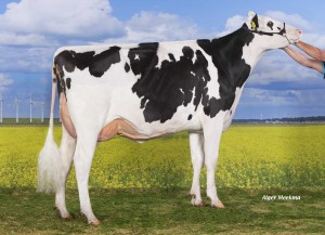 Holec Redrose Braxy 2 RC 2y VG-89