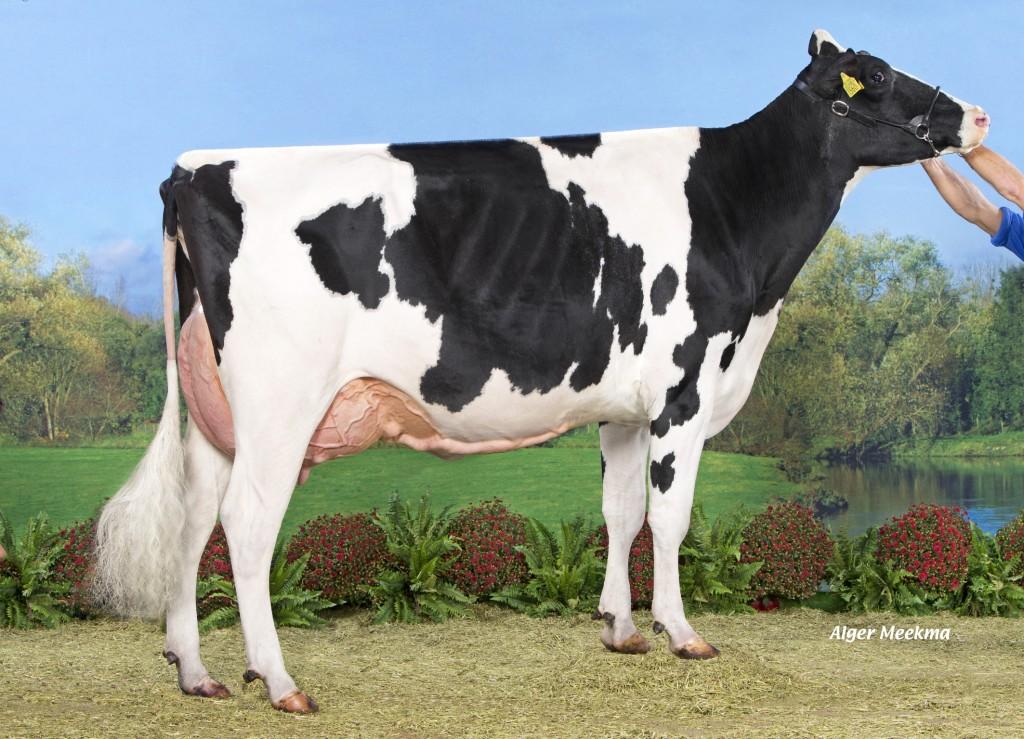 Hemrik Holsteins Brax Amber 2y VG-89