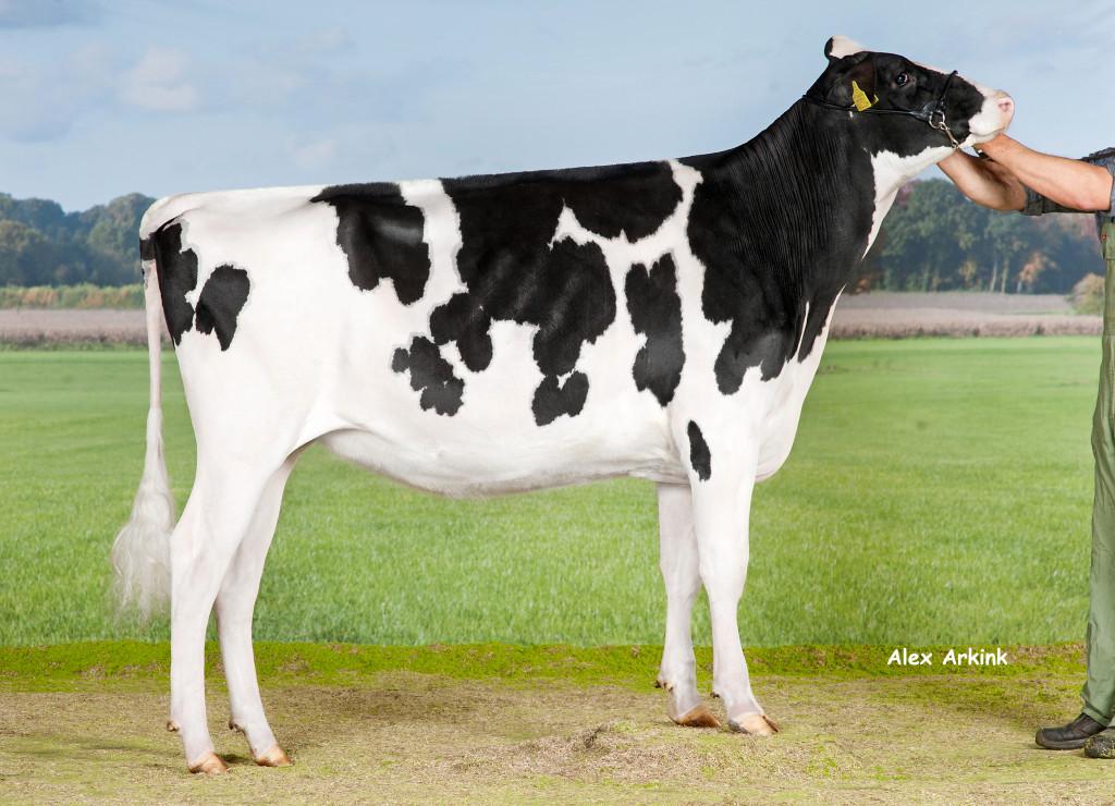 Huddlesford I Cow McBarbie