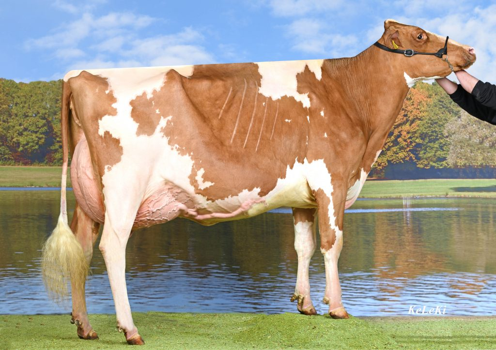 A-L-H Ladd Alina P Red 2y VG-85