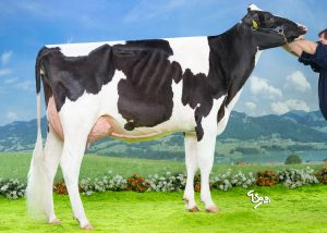 Gold Chip Behappy 2y VG-86