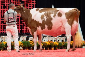 FEMbryos out of Kandie Red EX-95 her fancy Jordy daughter