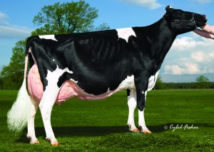 Vangoh Durham Treasure EX-96