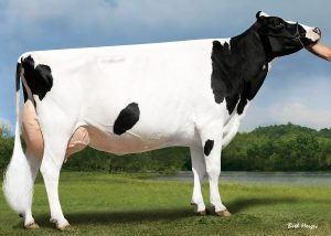 If you are looking for high-quality dairy cattle ….