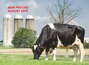 Bull proofs August 2019