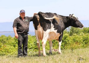 Holstein Canada New Cow of the Year