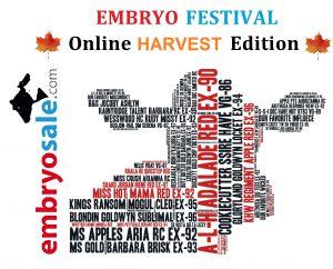EMBRYO FESTIVAL: HARVEST EDITION