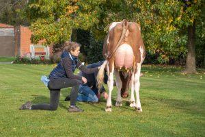 Prachtige koeien = Genieten!